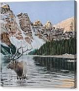 Elk In Moraine Lake Canvas Print