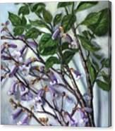 Empress Tree Canvas Print