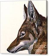 Ethiopian Wolf, Endangered Species Canvas Print