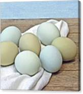 Exotic Colored Chicken Eggs Canvas Print