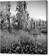 Faces Of The Swamp, No. 7 Canvas Print