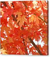 Fall Trees Colorful Autumn Leaves Art Baslee Troutman Canvas Print