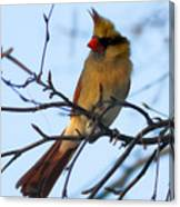 Female Northern Cardinal Canvas Print