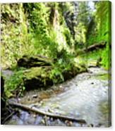 Fern Canyon, Redwood National Park Canvas Print