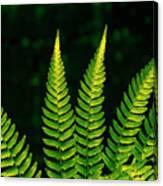 Fern Close-up Nature Patterns Canvas Print