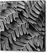 Fern Close-up Of Water Droplets Canvas Print