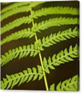 Fern Pattern Canvas Print