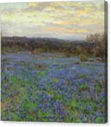 Field Of Bluebonnets At Sunset Canvas Print