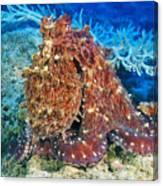 Fiji, Day Octopus Canvas Print