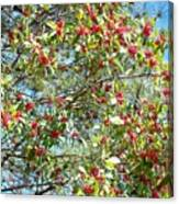 Firethorn Tree Canvas Print
