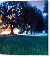 Five Oaks Canvas Print