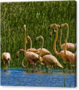 Flamingo Family Canvas Print