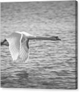 Flight Of The Swan Canvas Print
