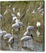 Flock Of Different Types Of Wading Birds Canvas Print