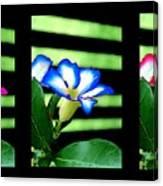 Floral Triptych Canvas Print