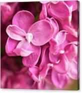 Flowers - Freshly Cut Lilacs Canvas Print