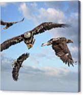 Flying Eagles Canvas Print