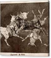 Fool's Folly Canvas Print