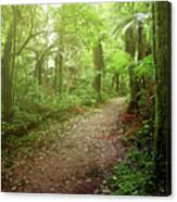 Forest Walking Trail 1 Canvas Print