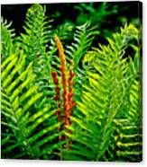 Fern Fractals In Nature Canvas Print