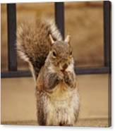 French Fry Eating Squirrel Canvas Print