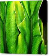 Fresh Green Leaves Canvas Print