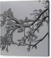 Fresh Snow On Magnolia Tree Canvas Print