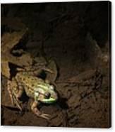 Frog 4 Canvas Print