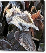Frost-lined Canvas Print