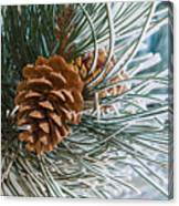 Frosty Pine Needles And Pine Cones Canvas Print