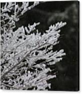 Frozen Branches Canvas Print