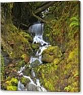 Streaming Through Rainforest Rubble Canvas Print