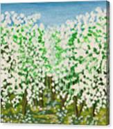 Garden In Blossom Canvas Print