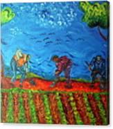 Gathering Potatoes Canvas Print