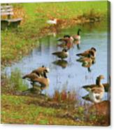 Geese Lake Fall  Canvas Print
