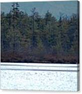 Geese On Labrador Pond Canvas Print