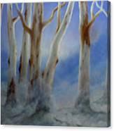 Ghostgum Mist Canvas Print