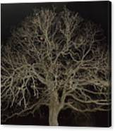 Ghostly  Tree Canvas Print