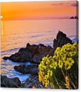 Giant Coreopsis Sunset Canvas Print