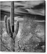 Giant Saguaro Canvas Print