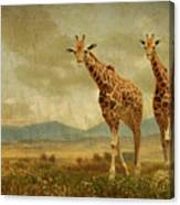 Giraffes In The Meadow Canvas Print