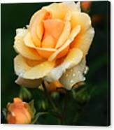 Glowing Rose Canvas Print