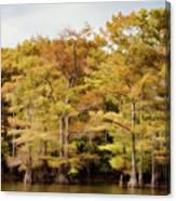 Golden Bayou Canvas Print