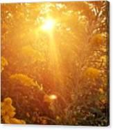 Golden Days Of Autumn Canvas Print