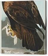 Golden Eagle Canvas Print