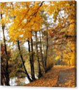 Golden Path Canvas Print