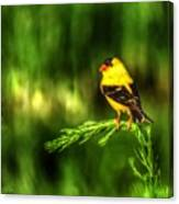 Goldfinch On Grass Canvas Print
