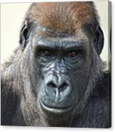 Gorilla 1 Canvas Print