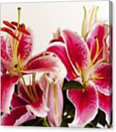 Graceful Lily Series 10 Canvas Print