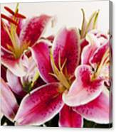 Graceful Lily Series 11 Canvas Print